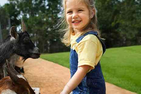 Feufield Farm - Family Entry With Animal Feed Plus Lunch - Save 50%