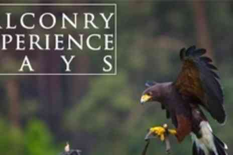 Chris Miller Falconry Experiences - Half Day Falconry Experience Plus Pub Lunch - Save 78%