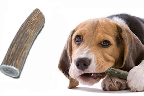 Assist World - Treat your beloved dog to the natural Antler Dog Chew Kit - Save 75%