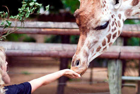 ZSL London Zoo - Zoo Keeper for a Day - Save 36%