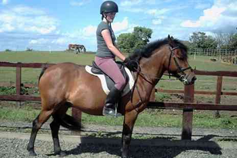 Poppyfield Equestrian Centre - Horse Riding Lessons For One - Save 40%