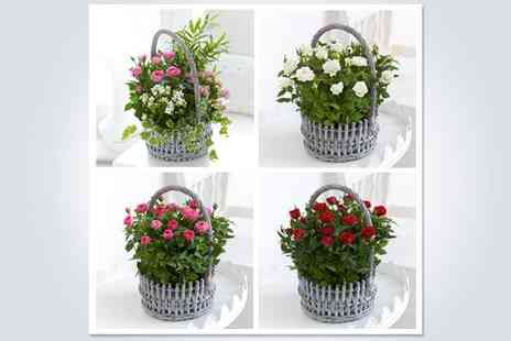 Joannes Florist - Brighten up someones Christmas with an elegant wicker flower basket - Save 50%