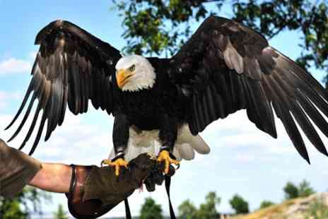 The Raptor Foundation - Raptor centre with eagles, falcons and hawks - Save 50%