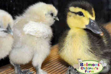 Belmont Childrens Farm - Family Farm Entry for Two Adults and Two Children with Two Bags of Animal Feed - Save 52%