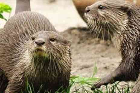 WWT Washington Wetland Centre - Family Day Pass - Save 63%