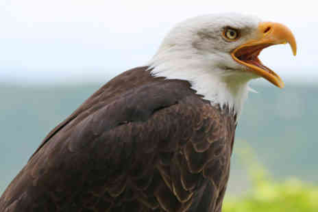 Falco - falconry experience  for two at Falco - Save 68%