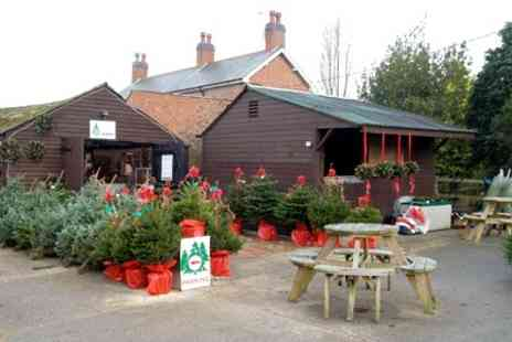 New Farm Christmas Trees - 5ft Xmas Tree With Stand Plus Refreshments - Save 50%