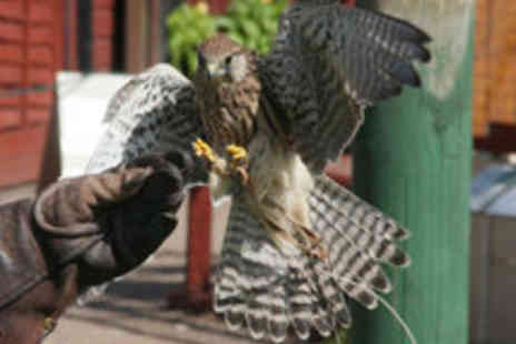 Gentleshaw Wildlife Centre - One Hour Falconry Lesson for One or Two People - Save 71%