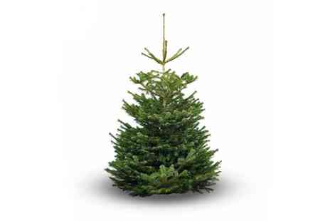 Lucky 9 Management - Nordmann Fir Real Christmas Tree - Save 44%
