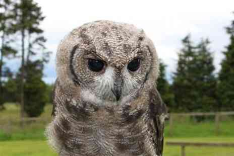 Falconry Days - Two Hour Owl Encounter Experience - Save 61%