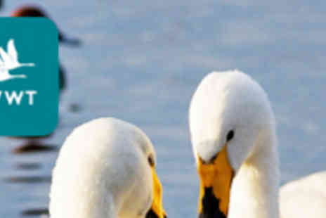 WWT Martin Mere Wetland Centre - Family Pass to Great Migration Winter Spectacle - Save 62%
