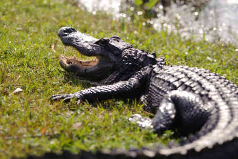 Exotic Zoo - Crocodile experience for one person - Save 51%