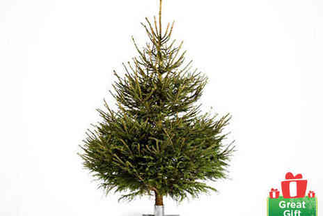 The London Christmas Company - Small, Medium or Large Norway Spruce Christmas Tree - Save 37%