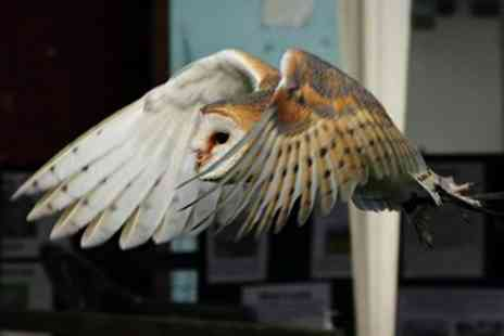 Gentleshaw Wildlife Centre - Bird of Prey Experience For One - Save 50%
