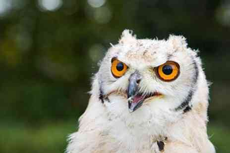 Hawkforce Falconry Experience Days - Two Hour Bird of Prey Experience For One - Save 65%