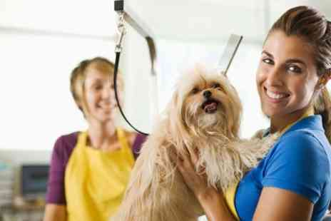 Doggie World - Dog Grooming For small medium or large - Save 48%