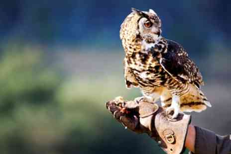 Exmoor Owl & Hawk Centre - Hands on Exmoor Birds of Prey Experience - Save 50%