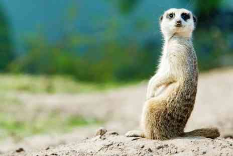 Blackbrook Zoological Park - Meerkat and Penguin Experience For One - Save 50%
