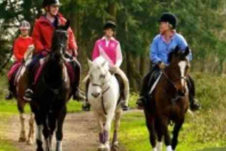 Ruislip Park Stables - Horse riding through ruislip woods - Save 55%