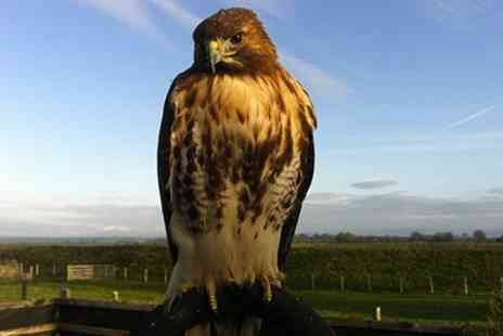 Northside Falconry - Falconry Experience with tea and coffee refreshments - Save 58%