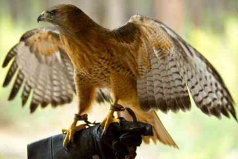 Rutland Falconry and Owl Centre - Two Hour Experience - Save 77%