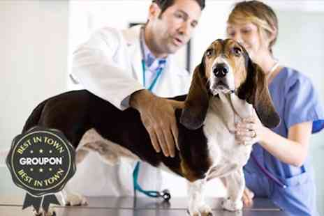 Champion Vet - Veterinary Services For Dogs and Cats - Save 64%