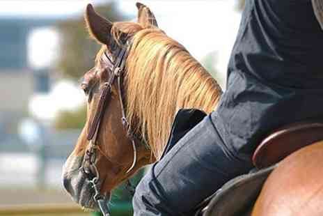 Pembrey Park Riding Centre - Horse Riding One Hour Lesson or Trek - Save 50%