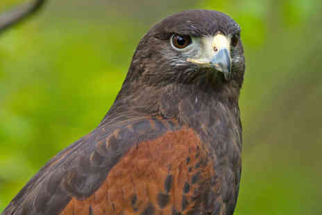 S&D Falconry - Half Day Falconry Experience - Save 73%
