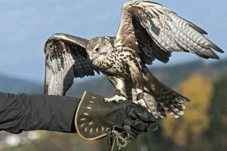 Wildlife Displays - 90 Minute Falconry Experience for One or Two People - Save 71%
