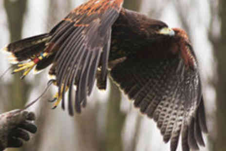 Fens Falconry - Thrilling Falconry Experience with Lunch - Save 51%