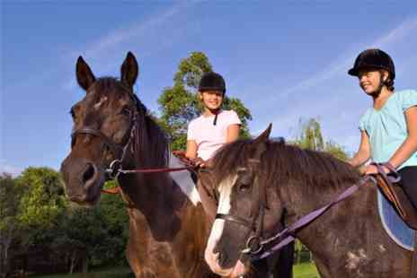 Kailzie Equestrian Centre - One hour Riding Lesson - Save 60%