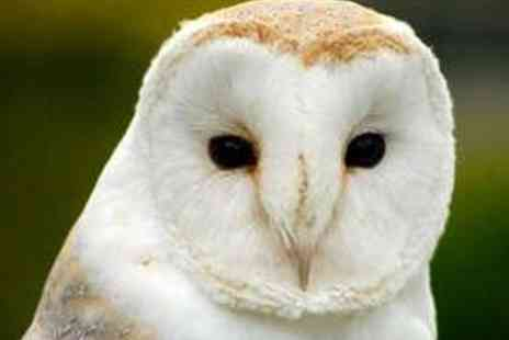 Libertys Owl Raptor and Reptile Centre - Owl Handling and Flying Experience - Save 71%