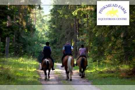 Pinkmead Farm Equestrian Centre - One Hour Horse Riding plus a Two Course Lunch for £18 - Save 57%