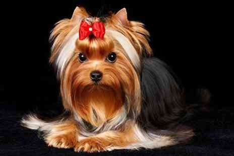Scoobys Dog Grooming - Service For Small Dog - Save 40%