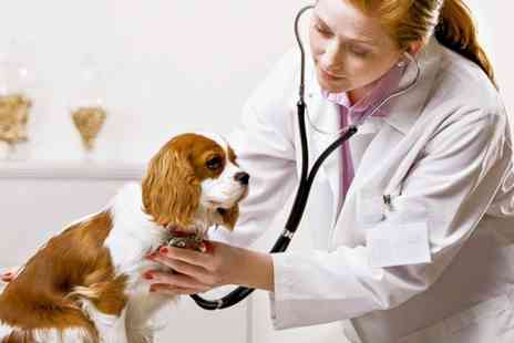 Companion Care Vets -  Puppy or Kitten Primary Vaccine Course - Save 53%