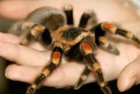 Wellybobs Farm Park - Childrens Creepy Crawly Experience - Save 50%