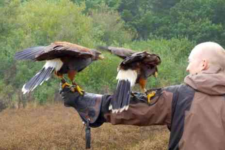 Hawkridge Bird of Prey Centre - Two Hour Hawk Walk Experience - Save 66%