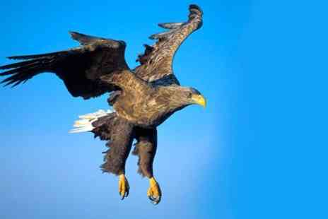 Birds of Prey Centre - Eagle Experience  - Save 78%