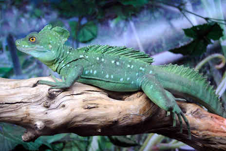 Blackbrook Zoological Park - Reptile handling experience & adoption pack - Save 52%
