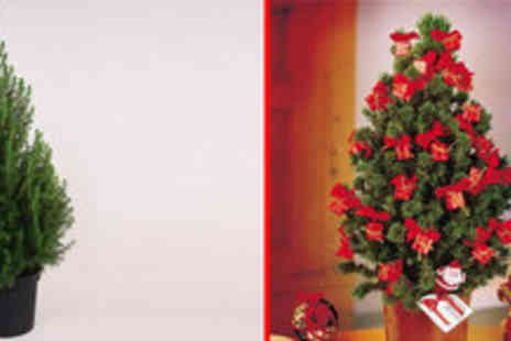 Gardening Express - Traditional Christmas Tree - Save 50%