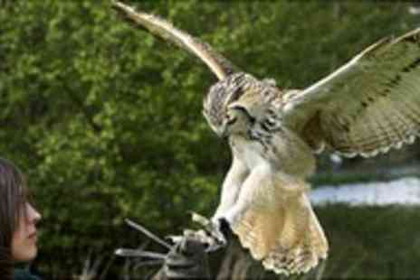 Birds of Prey Centre - Owl Experience Half Day - Save 77%