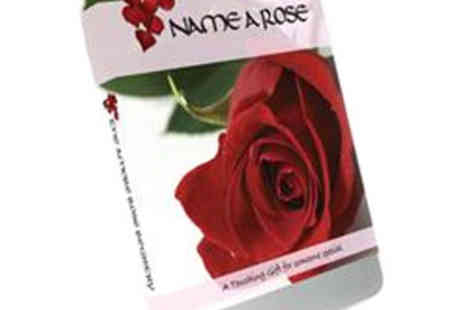 Crowther Creative - A Valentines to Cherish Name a Rose after Someone Special with this Gift Set - Save 50%