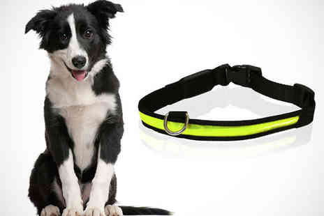 Monster Pet Supplies - Medium Rosewood Flashing Dog Collar in Yellow - Save 56%