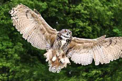 Rutland Falconry & Owl Centre - Two Hour Birds of Prey Experience - Save 77%
