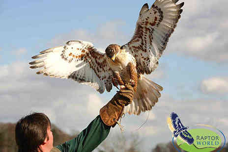 Raptor World - Two Hour Bird Handling Experience for One - Save 62%
