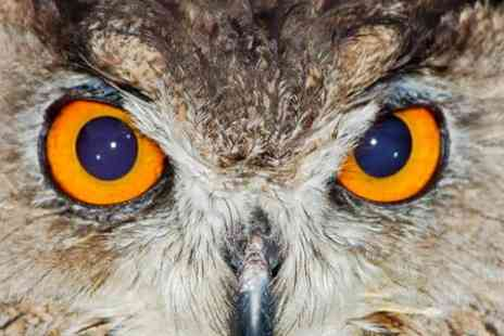 York Bird of Prey Centre - Entry For Two  - Save 38%