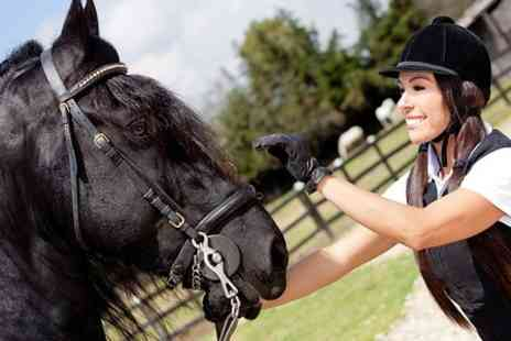 Wardhaugh Farm  Riding Centre - One Hour  Horse Riding Lesson - Save 61%