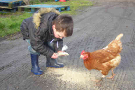 Highfields Happy Hens - Full Day Farm Experience for a Family of Four with Crazy Golf - Save 61%