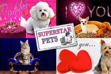 Superstar Pets - Superstar Pets Make your pet talk and star in its own personalised greeting video  - Save 60%