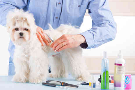LDL Learning - Online dog training or grooming course - Save 92%